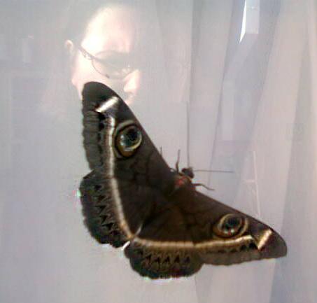 Owl-Moth captured on 07-04-2014 07:57