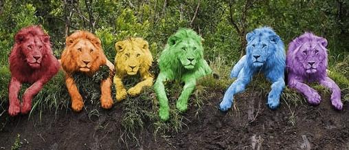 rainbow-lions