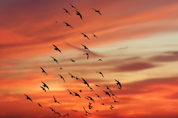 sunset-birds