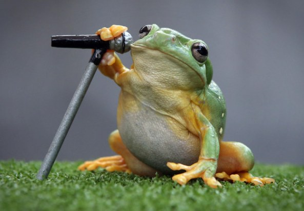 These-red-eye-tree-frogs-are-rocking-out-for-the
